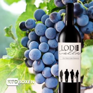 Scotto Cellars - Old Wine Lodi Ave Zinfandel